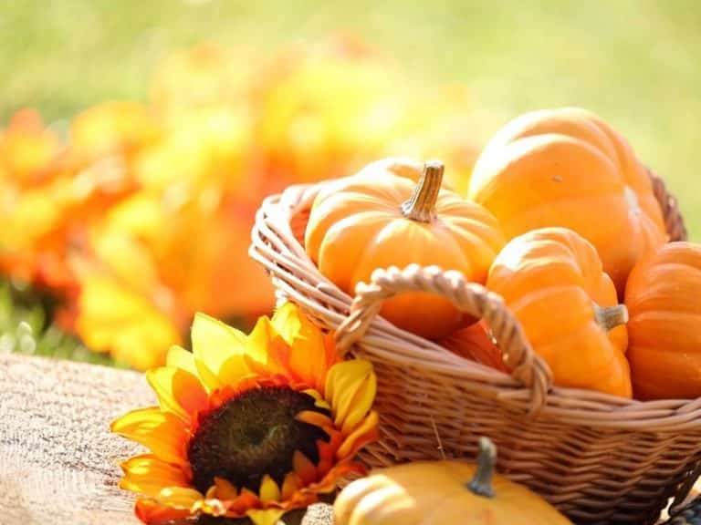 Trick or Treat! 5 Amazing Pumpkin Beauty Recipes Body Care Skin Care>Skin Care at Home